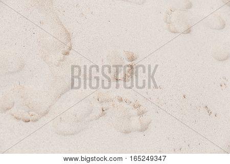 Footprints In White Coastal Sand