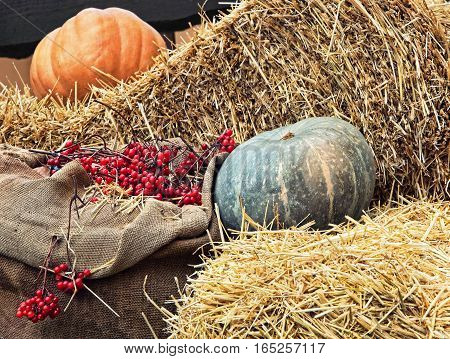 Thanksgiving Display of Pumpkin on hay stacks and burlap sack with red berries taken closeup.Toned image.
