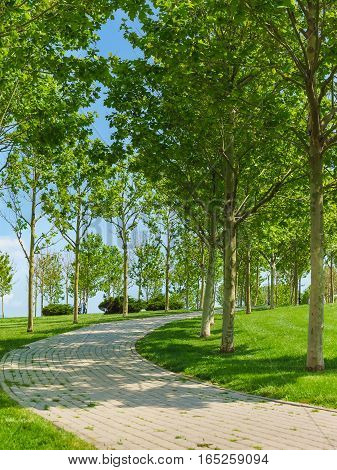 a Landscaped area on the waterfront of the city of Novorossiysk with paved alleys and young sycamores