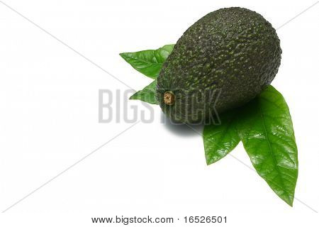One whole Hass Avocado with young leaves from an  Avocado tree, isolated on white