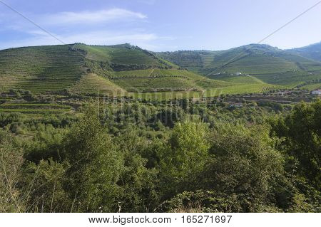 Countryside landscape and vineyards during summer season in rural Portugal