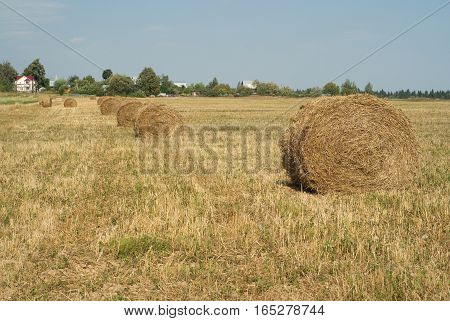 Countryside landscape with many hay rolls on cultivate field on summer day