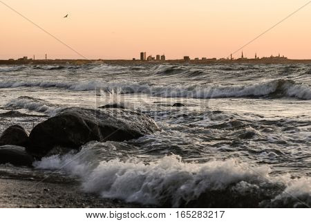 seagull flies on stormy sea. Tallinn silhouette the capital of Estonia on background