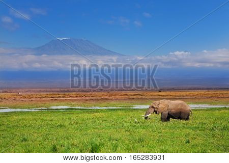 Magnificent tusker bull of African elephant with Kilimanjaro on background, Kenya
