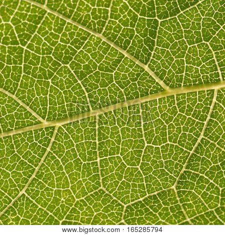 Green plant leaf part extreme closeup as background