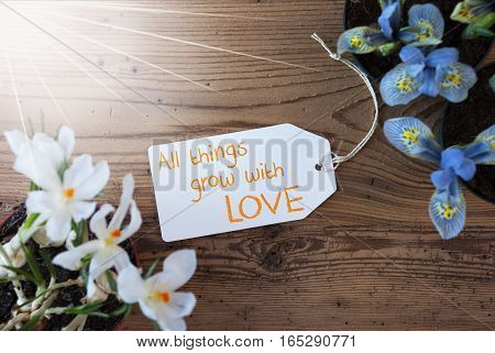 Sunny Label With English Quote All Things Grow With Love. Spring Flowers Like Grape Hyacinth And Crocus. Aged Wooden Background