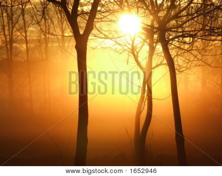 Sunrise On A Misty Morning