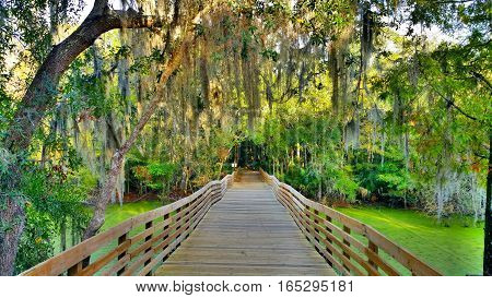 Alafia River State Park walking trail bridge