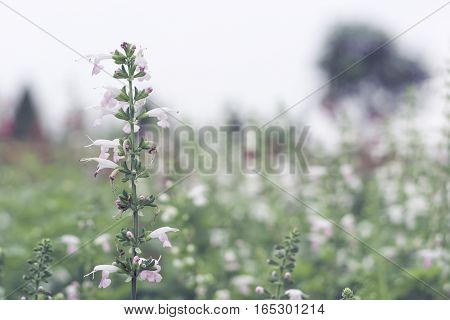 Selective focus flowers background. Amazing view of colorful flowering in the garden and green grass landscape at winter day