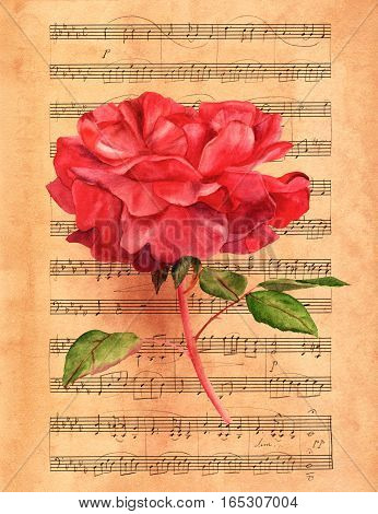 Watercolor drawing of vibrant red rose flower, hand painted in the style of vintage botanical art on a piece of toned sheet music
