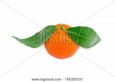 One fresh ripe mandarin orange with small twig and two leaves on a light background