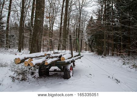 Winter Forest / Winter in the woods. Snowy forest in winter.