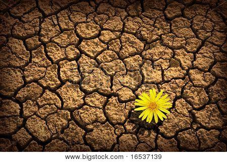 Patrón de agrietada y seca el suelo con una sola flor