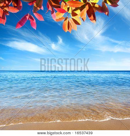 Bela praia com calma cristal claro água e árvore ramo.