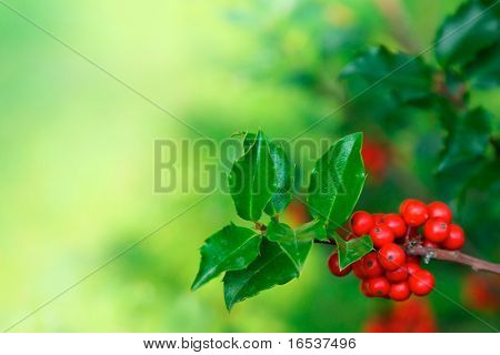 Photo of holly branch detail with copyspace