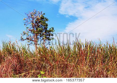 Dry grass and trees with blue sky.