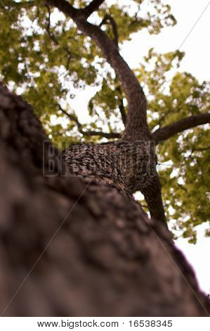 árbol del Olmo hasta cerrar con poca profundidad de campo que proporciona hasta cerca de corteza en el primero plano y suave fo