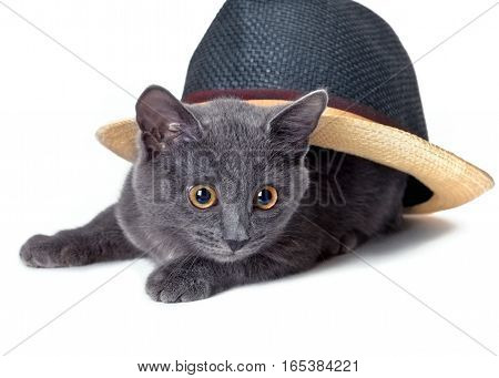 Gray kitten under the hat, on a white background