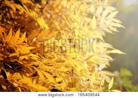 Bright autumn leaves under sunlight. Fall seasonal background