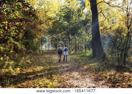 walking in the woods on a sunny day in autumnThe Netherlands