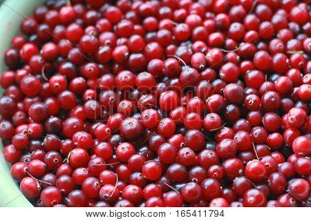 bucket full of ripe red cranberries closeup
