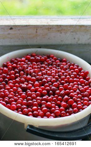 bucket full of ripe red cranberries near window