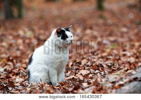 Portrait Of A Black And White Cat Sitting On A Background Of Fallen Autumn Leaves
