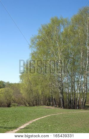 Beautiful spring landscape with path birches and clear blue sky in rural place