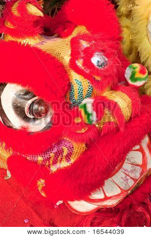 traditional chinese lion dancing for celebration chinese new year