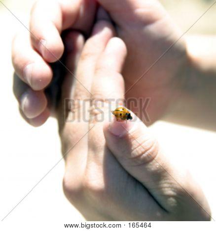 Ladybug In Hand
