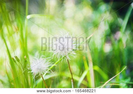 Green Grass And Wild Plants In The Forest.