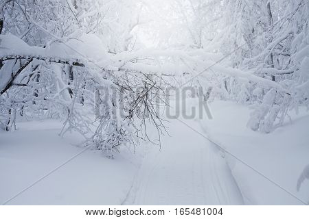 Winter beautiful landscape with trees covered with hoarfrost