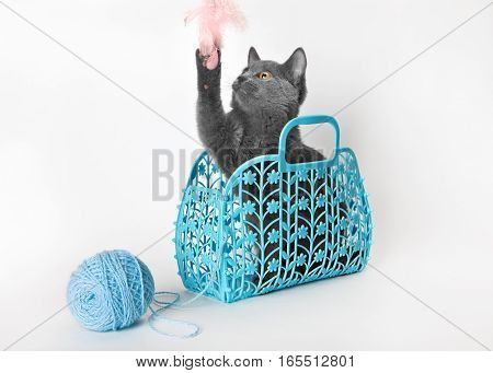 Gray kitten in a plastic basket with a ball of yarn