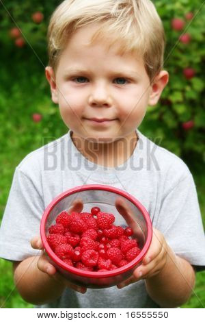 Four year old boy showing freshly picked raspberries and red currants with raspberry plants in the background. Shallow DOF with focus on fruits.