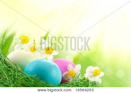 Easter Eggs sitting on grass in sunshine,Large copy space.
