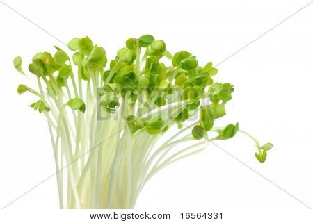 Radish sprout, isolated on white