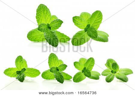 Fresh mint leaves isolated on white.