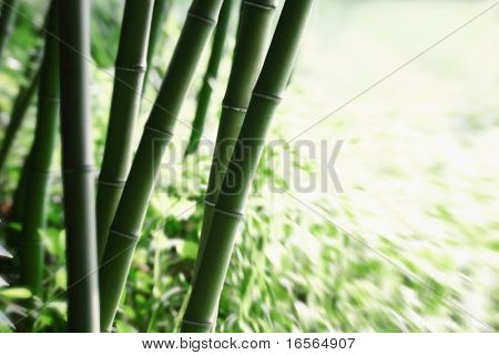 Abstract green bamboo grove.