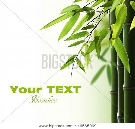 Fundo de bambu com espaço de cópia
