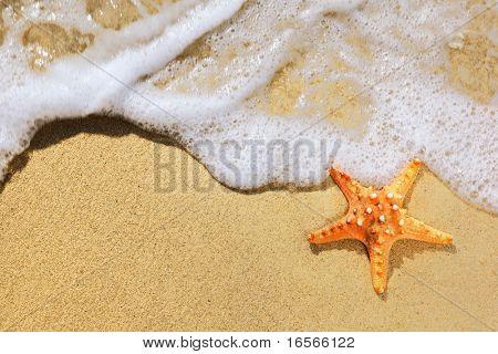 Closeup of starfish on beach