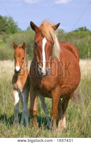 Mare And Son
