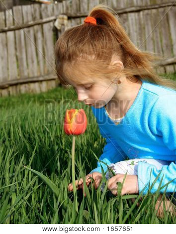 Small Girl Noses A Tulip