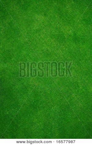 Vista de un sano superior y y recientemente la hierba cortada