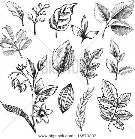 Sketchy Ornamental Leaves and Flowers Vector Illustration