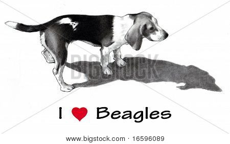 Pencil Drawing of Beagle Dog