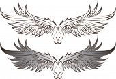 foto of bat wings  - Vector wings - JPG
