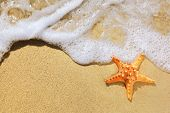 Closeup of starfish on beach