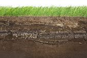 foto of cross-section  - Cross section of green grass and underground soil layers beneath - JPG