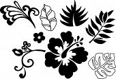foto of hawaiian flower  - Tropical Elements Vector Illustration - JPG