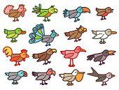 pic of turkey-cock  - birds  - JPG